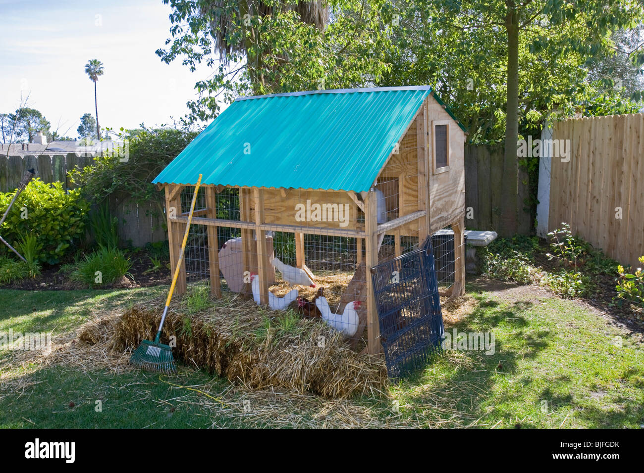 chicken coop in backyard of house in los angeles california usa