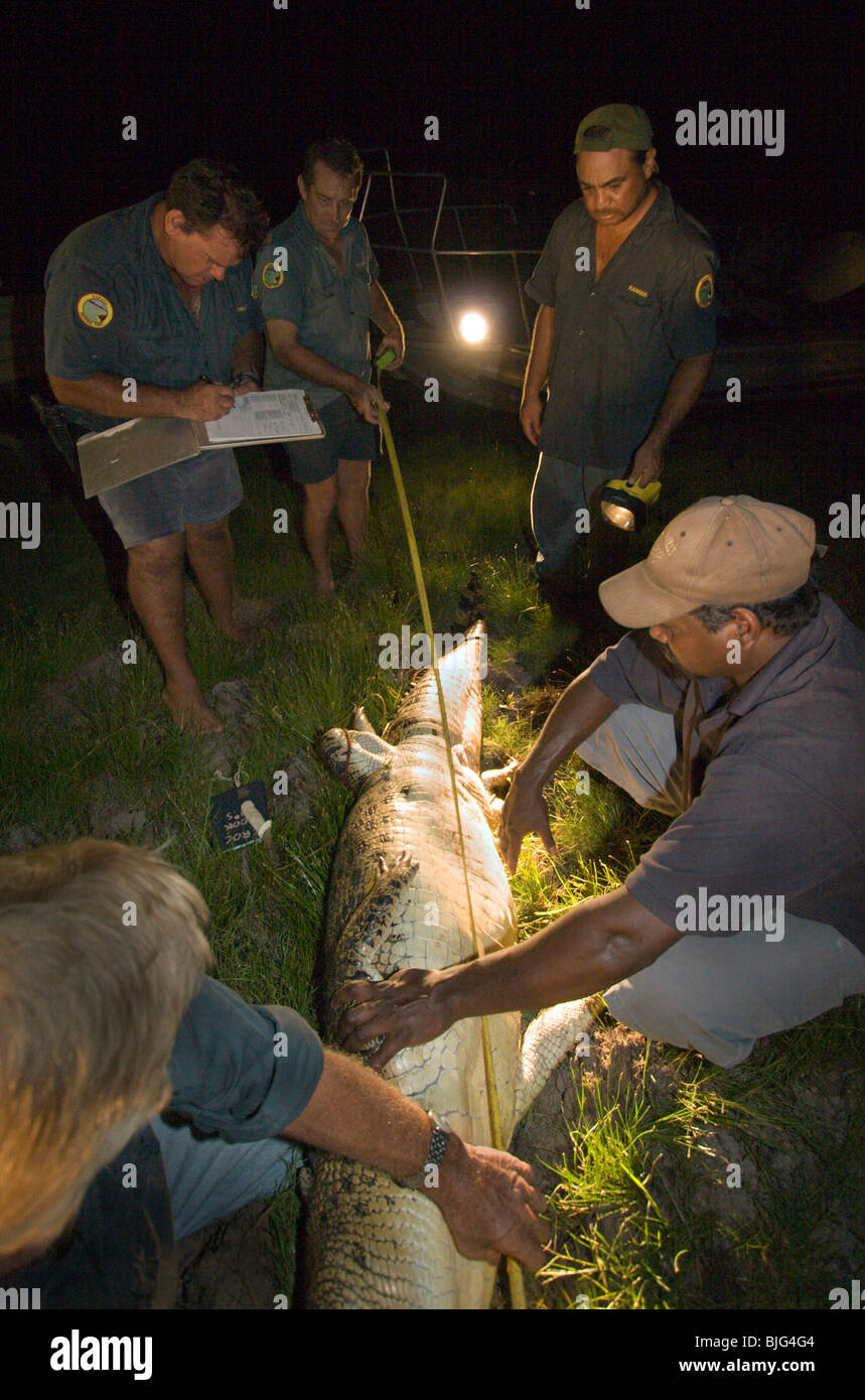 how to catch bait fish at night