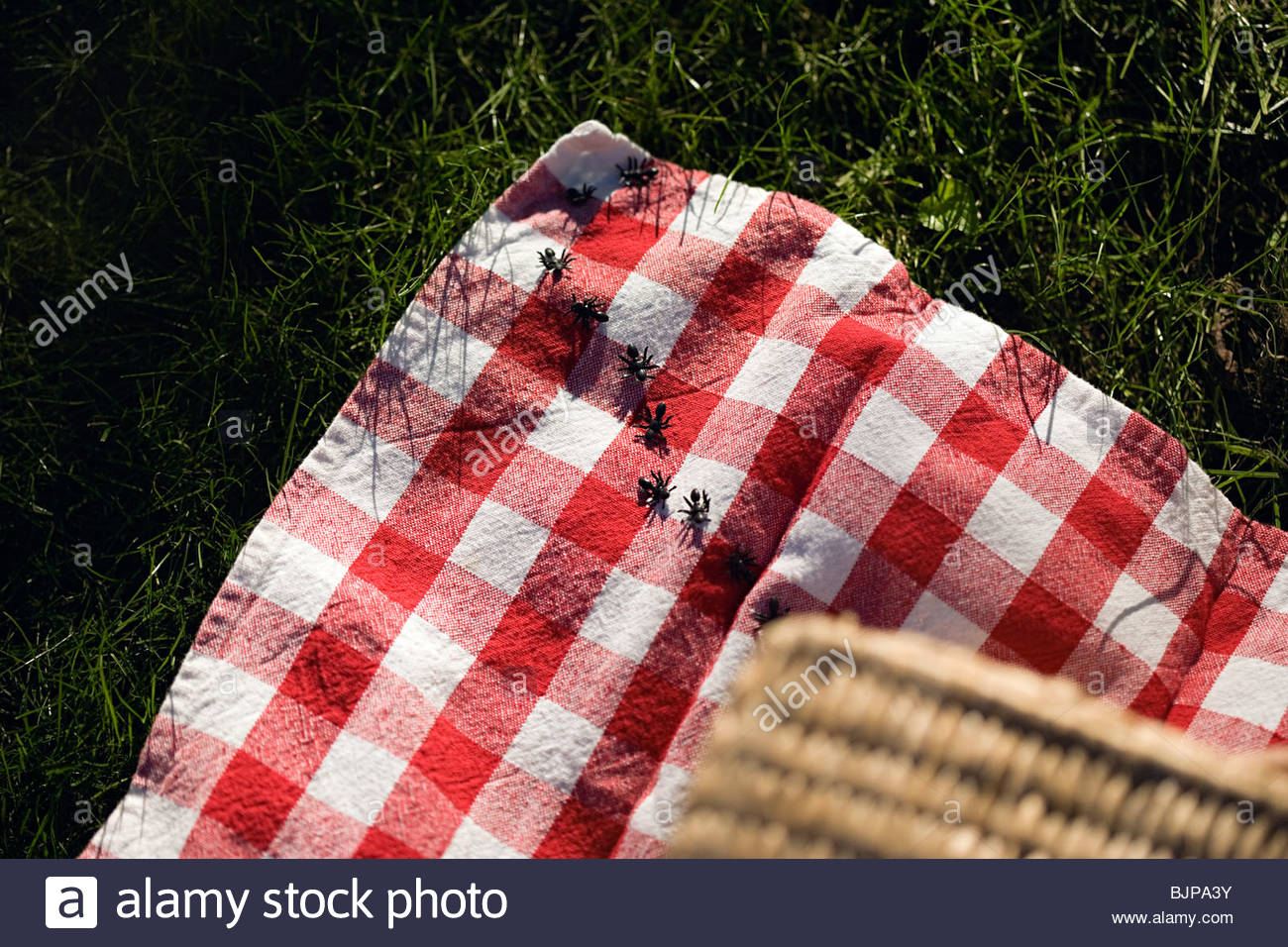 Ants on a picnic blanket Stock Photo, Royalty Free Image ...