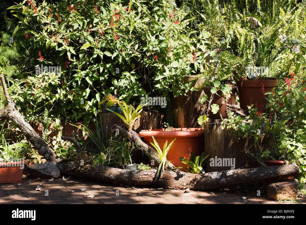 Pot Plants, Log, Rocks And Water Feature Make Up A Container Garden In A  Corner Of A Paved Patio
