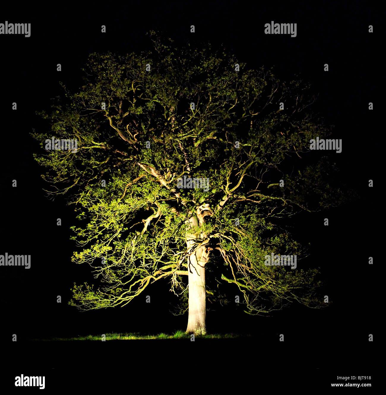 Lit-up tree at night Stock Photo, Royalty Free Image ...