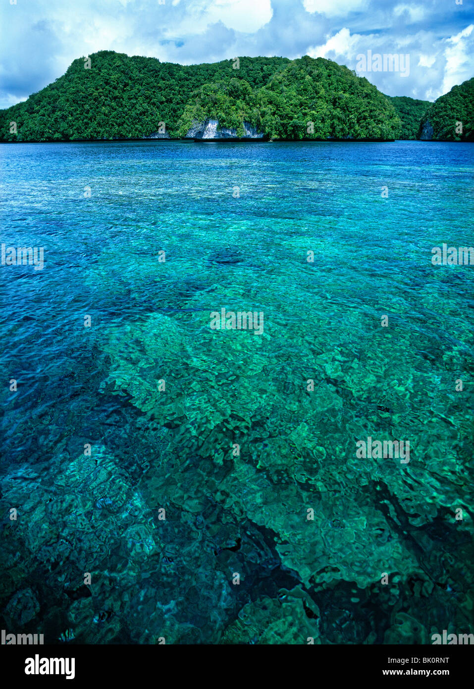 palau coral reef essay A gis map of palau's coral reefs source: a political map of the islands of palau.