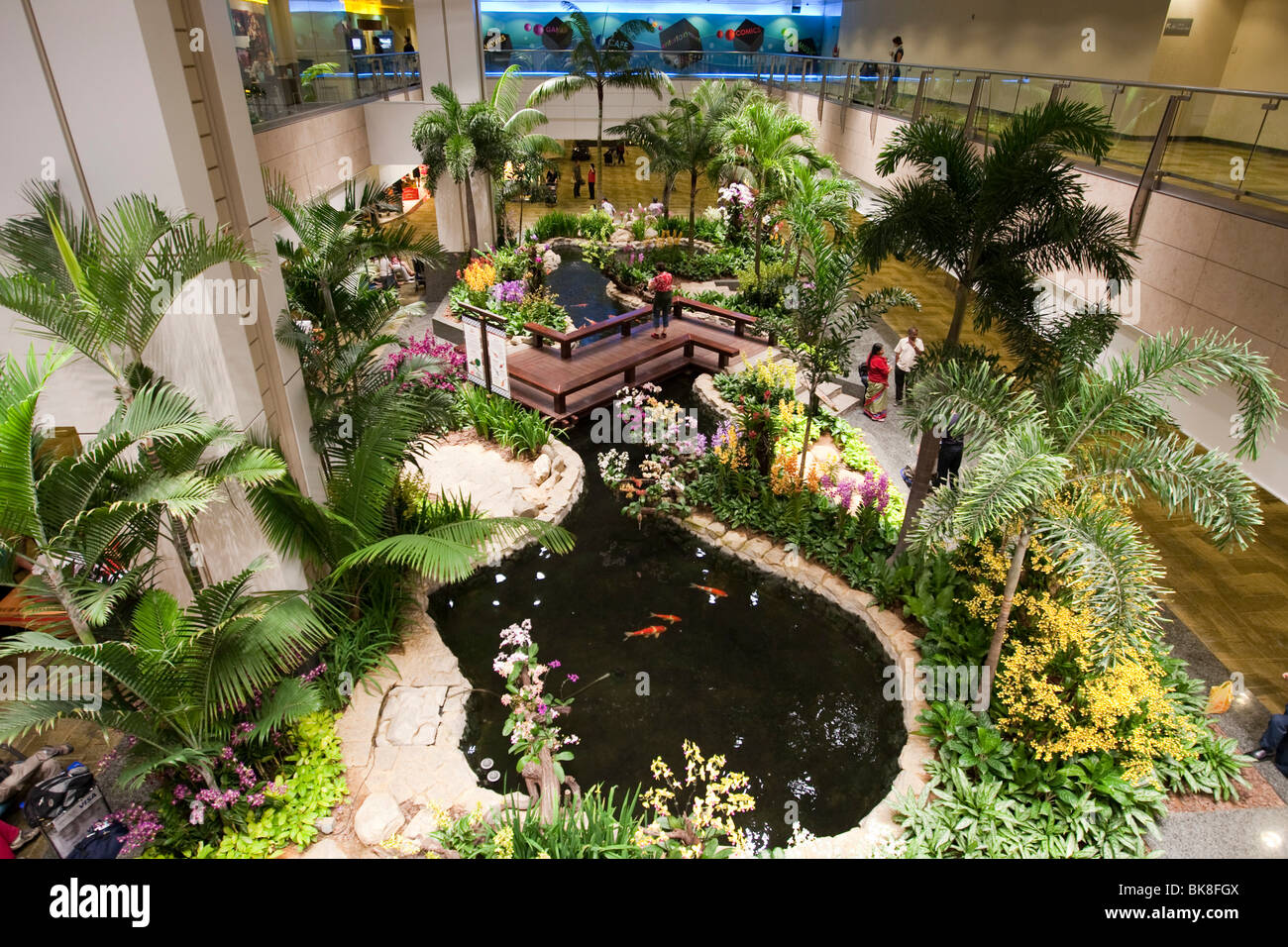 Orchid garden in Changi Airport, Singapore, Indonesia, Southeast ...