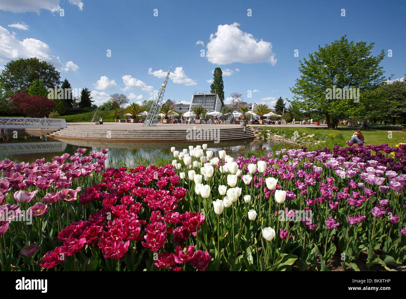 tulipan, tulips bloom in the kalenderplatz square, britzer garten, Garten ideen