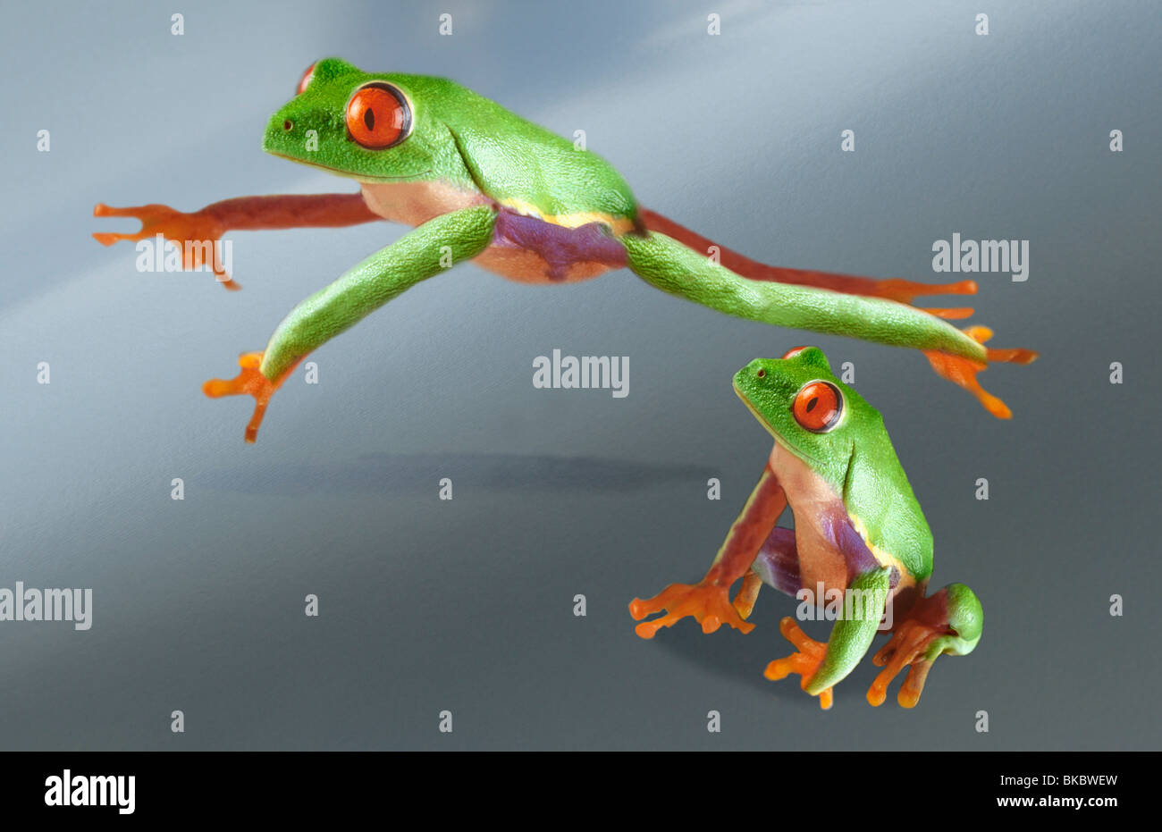 frogs playing leapfrog stock photo royalty free image 29150321