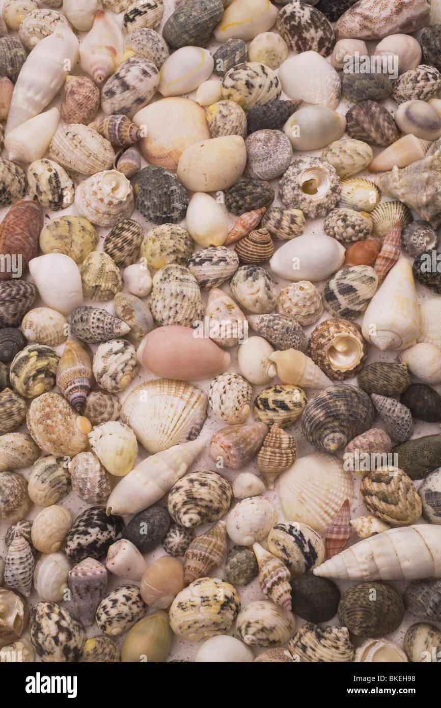 assorted seashells stock photo royalty free image 29209748 alamy