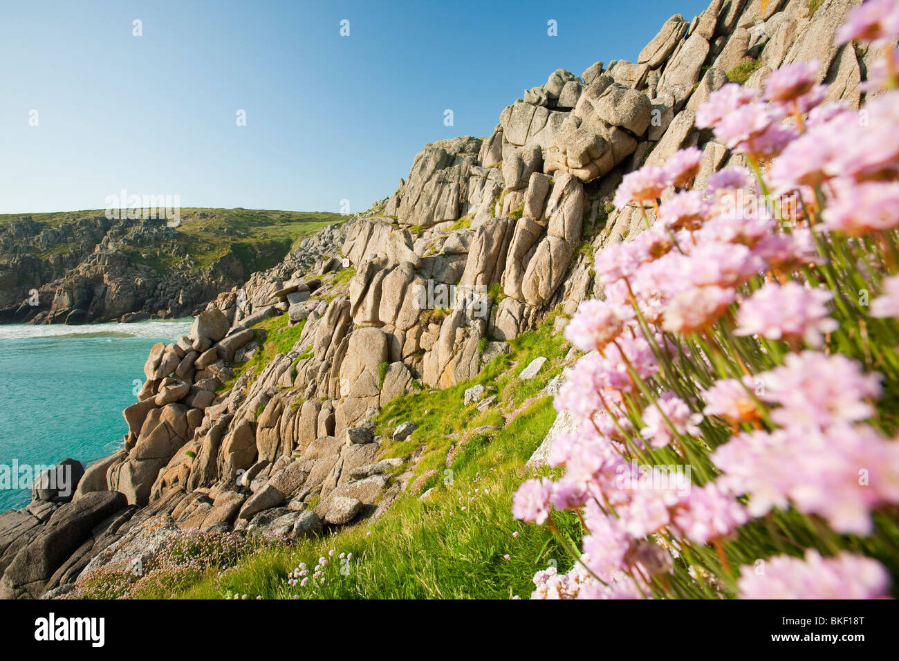 Sea pinks flowering on logan rock headland at porthcurno in cornwall sea pinks flowering on logan rock headland at porthcurno in cornwall uk mightylinksfo Image collections