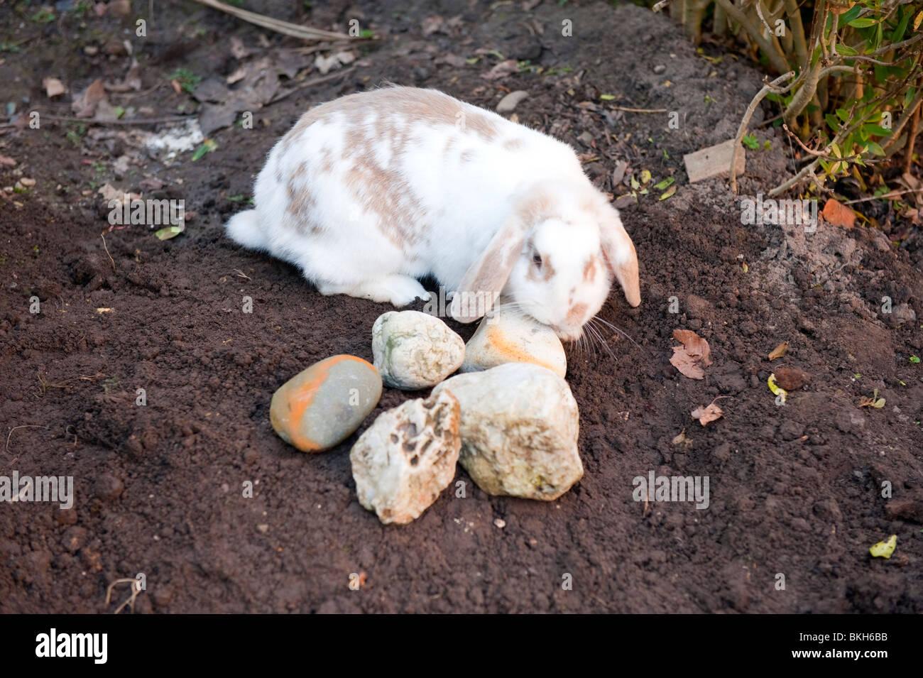 pet funeral stock photos u0026 pet funeral stock images alamy