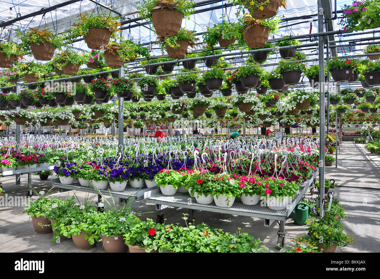 Outdoor Flowers For Sale Part - 27: ... Flowers And Plants On Sale At A Garden Shop In Spring. Bradford  Greenhouse Ontario -
