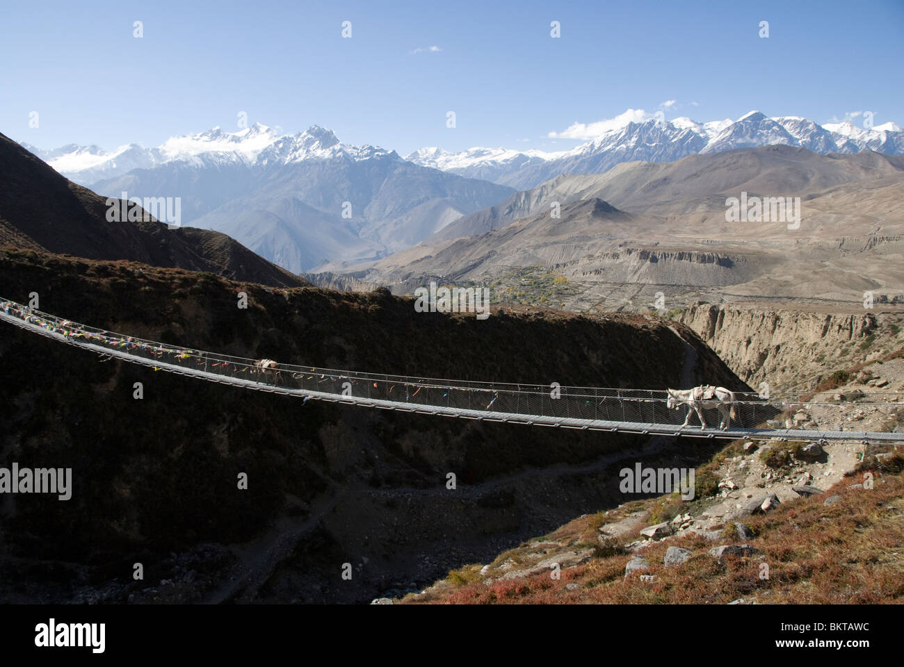 Donkeys crossing wire rope bridge near Muktinath, Annapurna ...