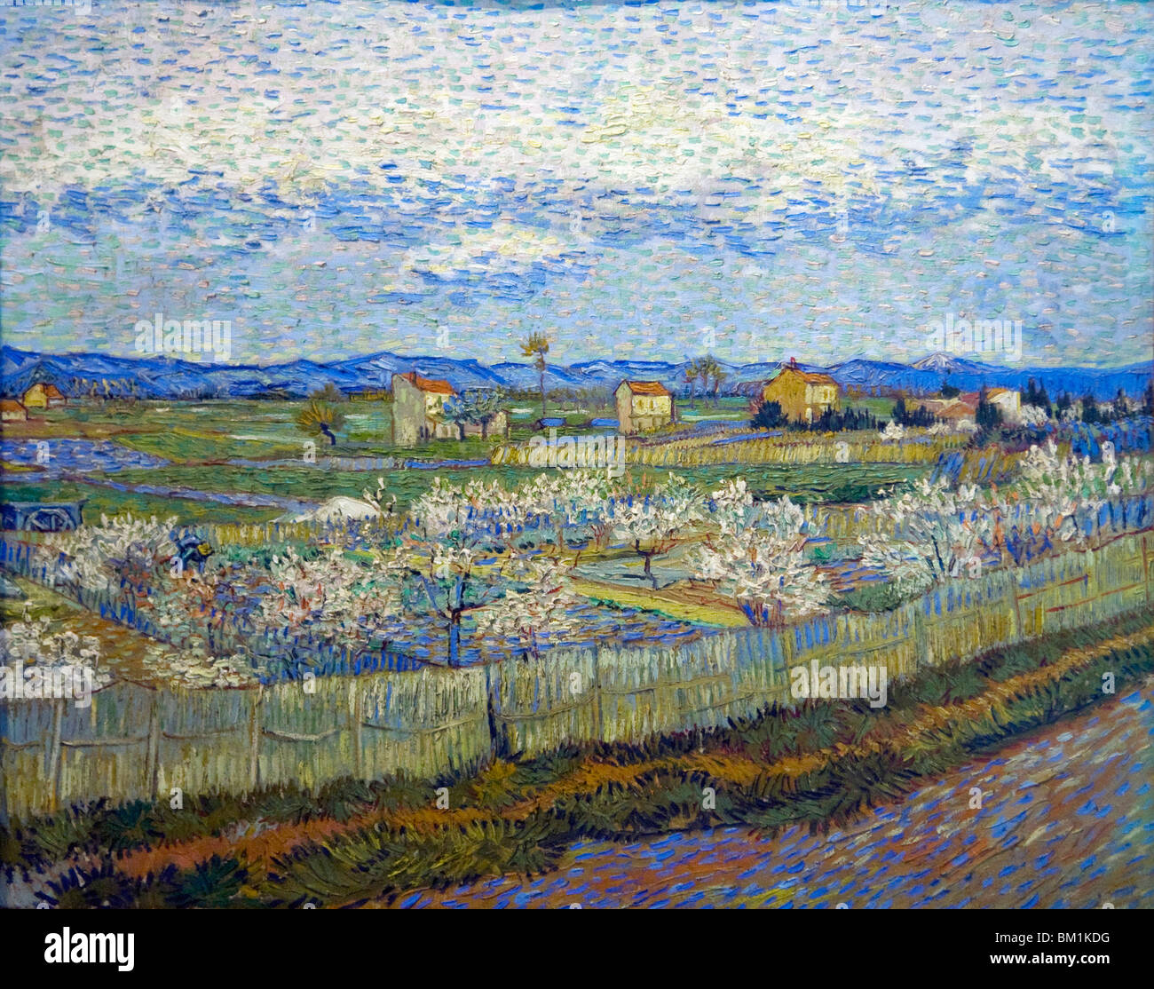 Crau at arles peach trees in flower painted by vincent van gogh 1889 courtauld institute gallery