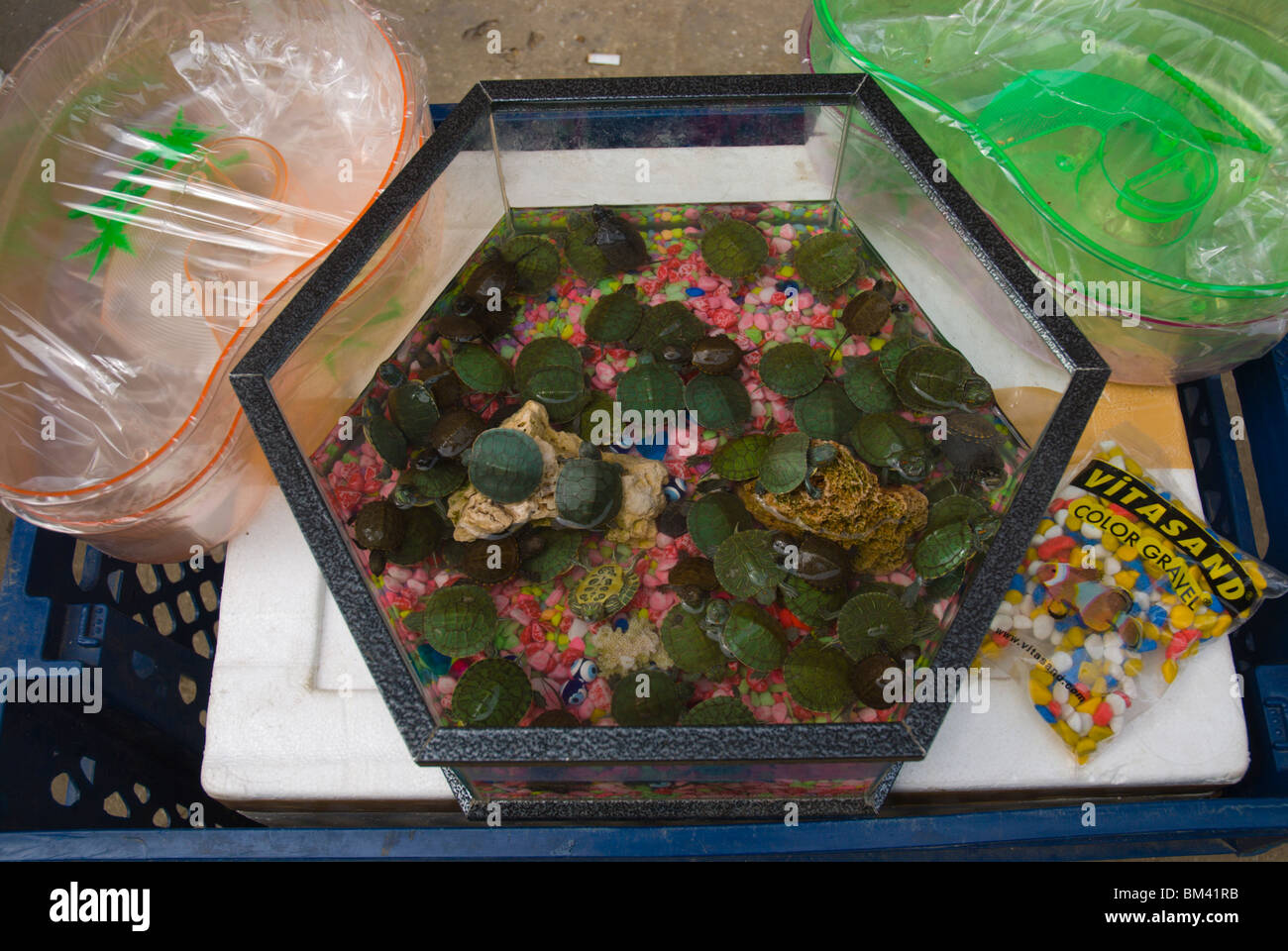 baby turtles for sale at spice bazaar market in sultanahmet