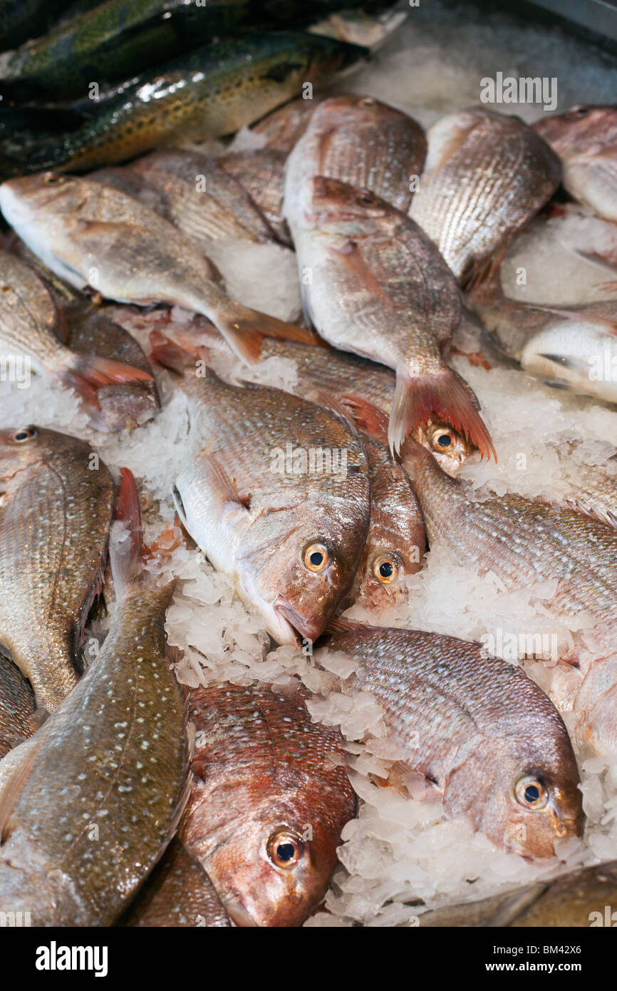 Fresh Fish For Sale At The Auckland Fish Market Auckland North Stock Photo Royalty Free Image