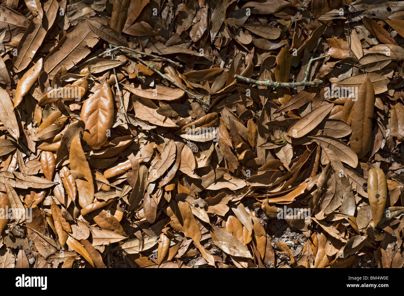 Pile of dead leaves in driveway stock photo 29610910 alamy pile of dead leaves in driveway biocorpaavc Images