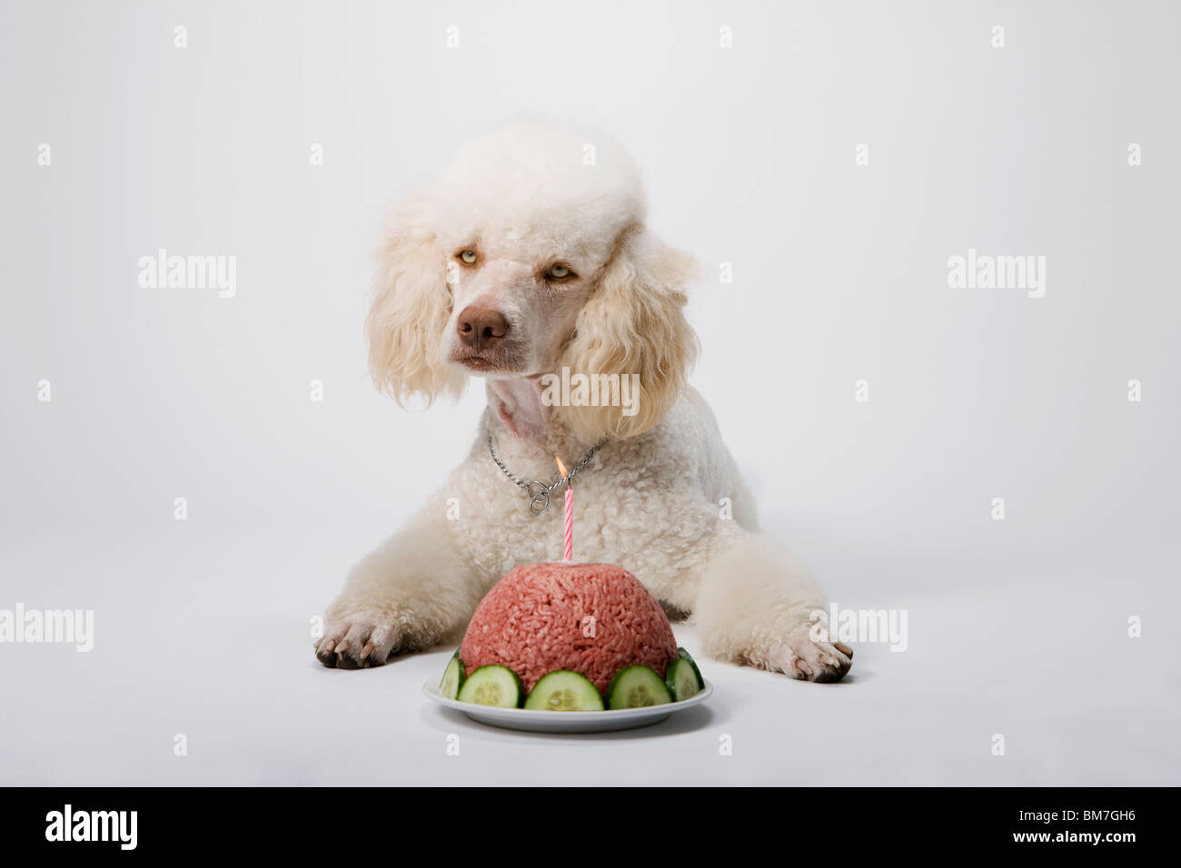 Birthday Cake For Dogs Meat ~ Doggy birthday cake puppy cakes s dog meat u holoportme site