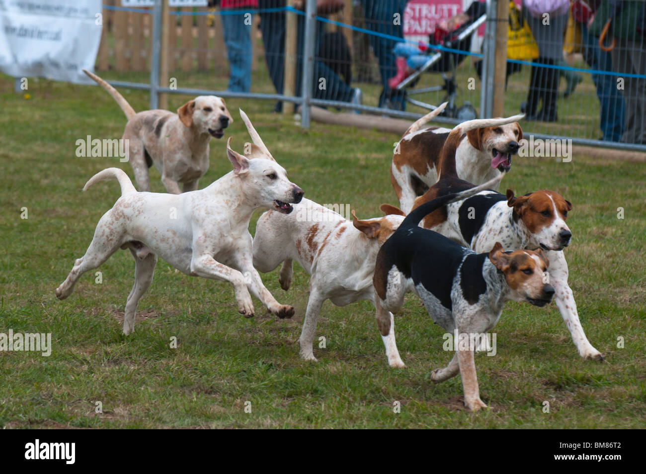 Fox Hounds | www.pixshark.com - Images Galleries With A Bite!
