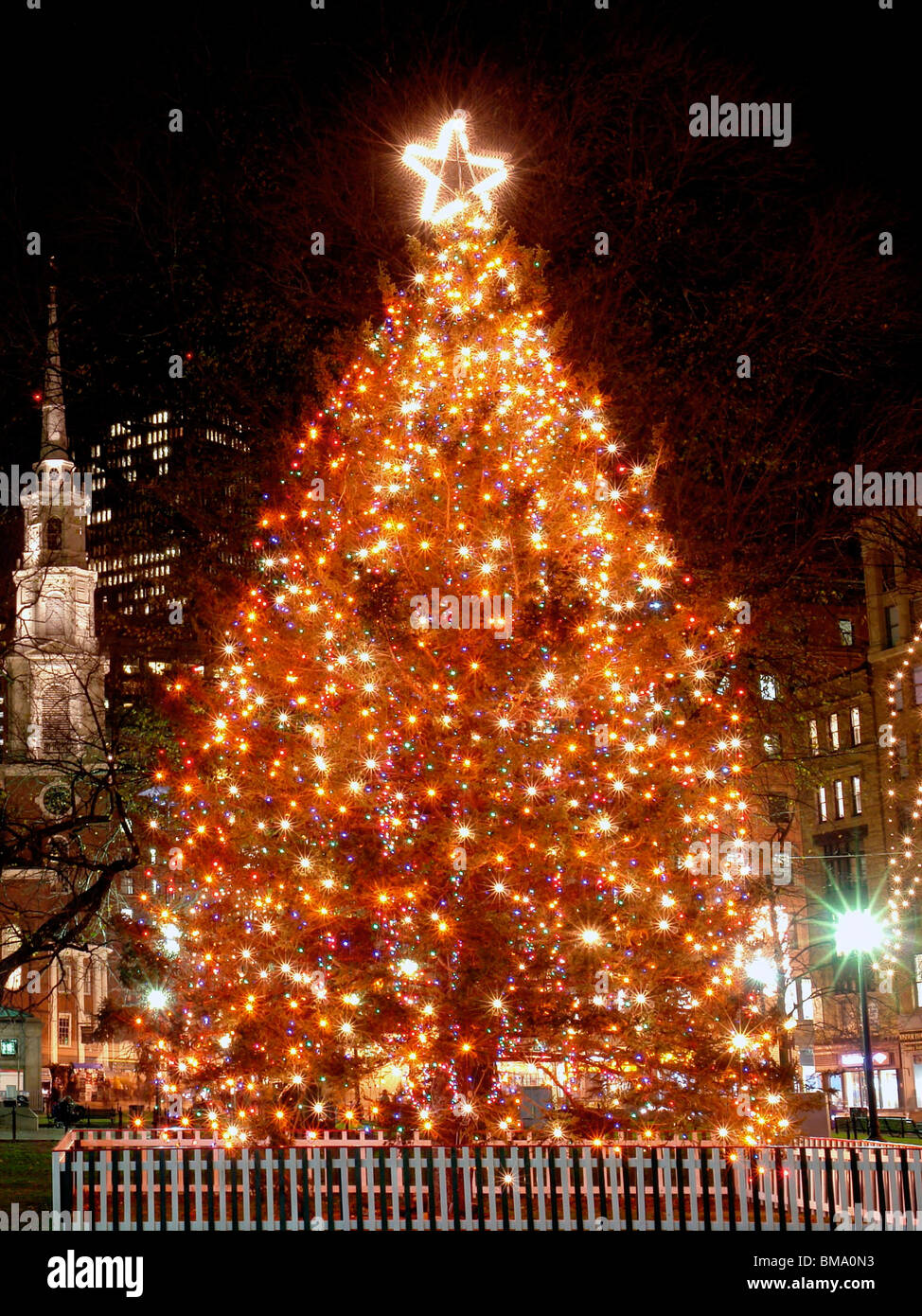 large decorated outdoor christmas tree on boston common lit up at