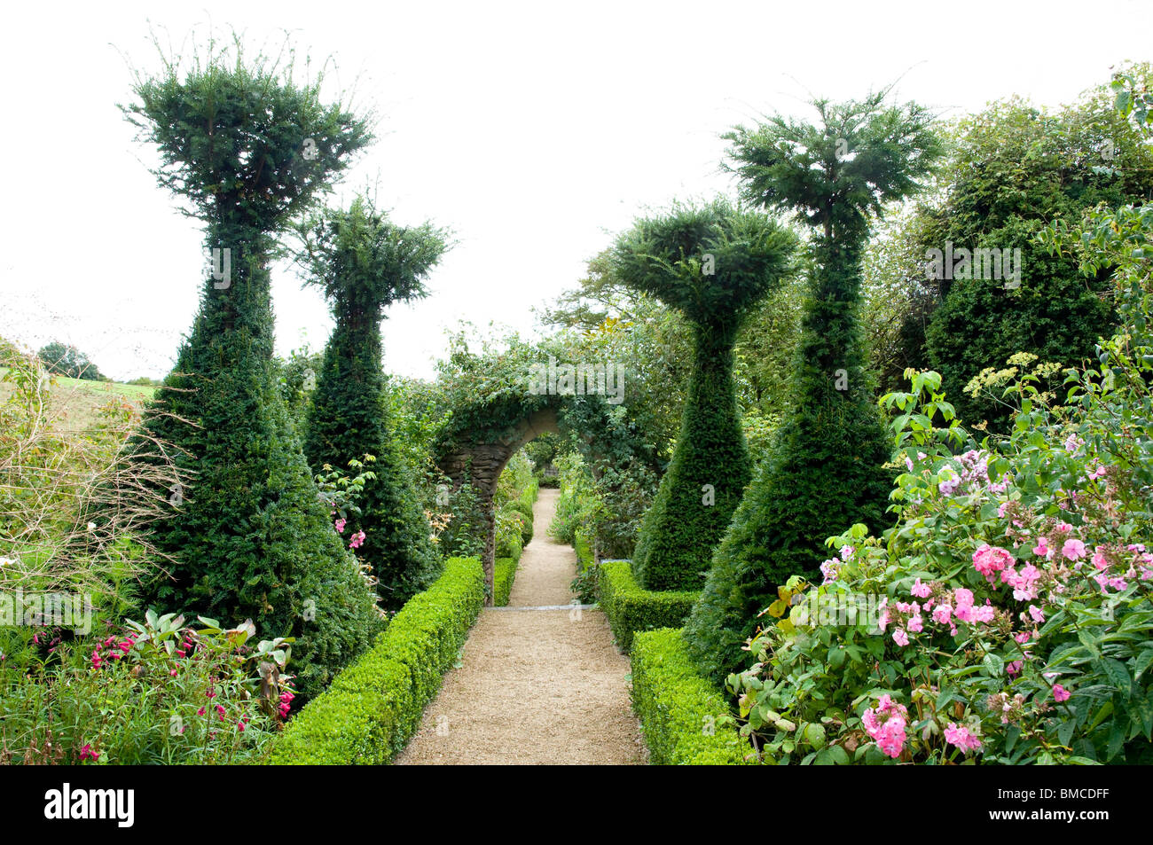 Rose garden with yew trees at hanham court gardens for Garden yew trees