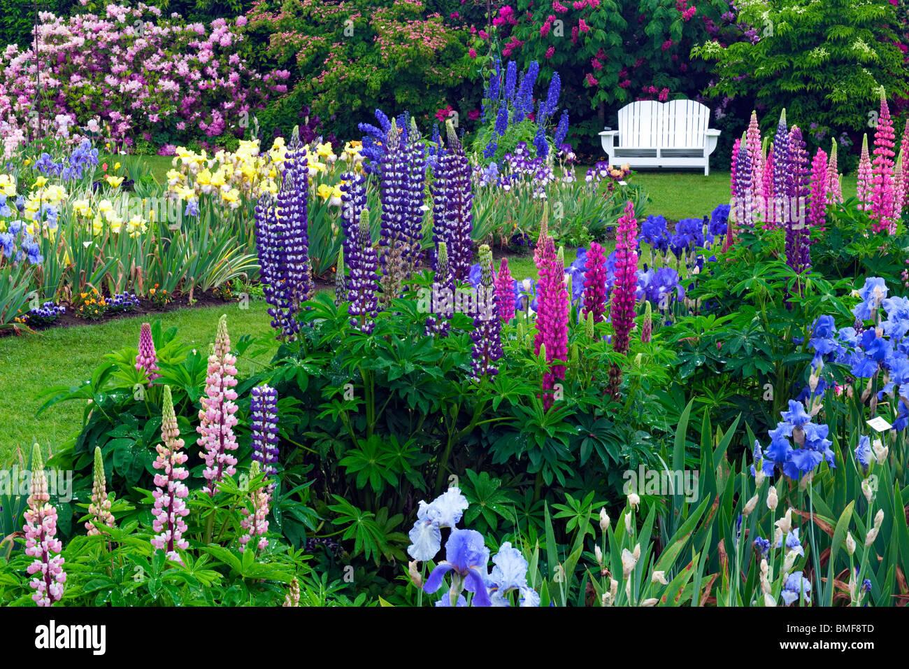 Spring Blooms At Schreiner 39 S Iris Display Garden In Oregon