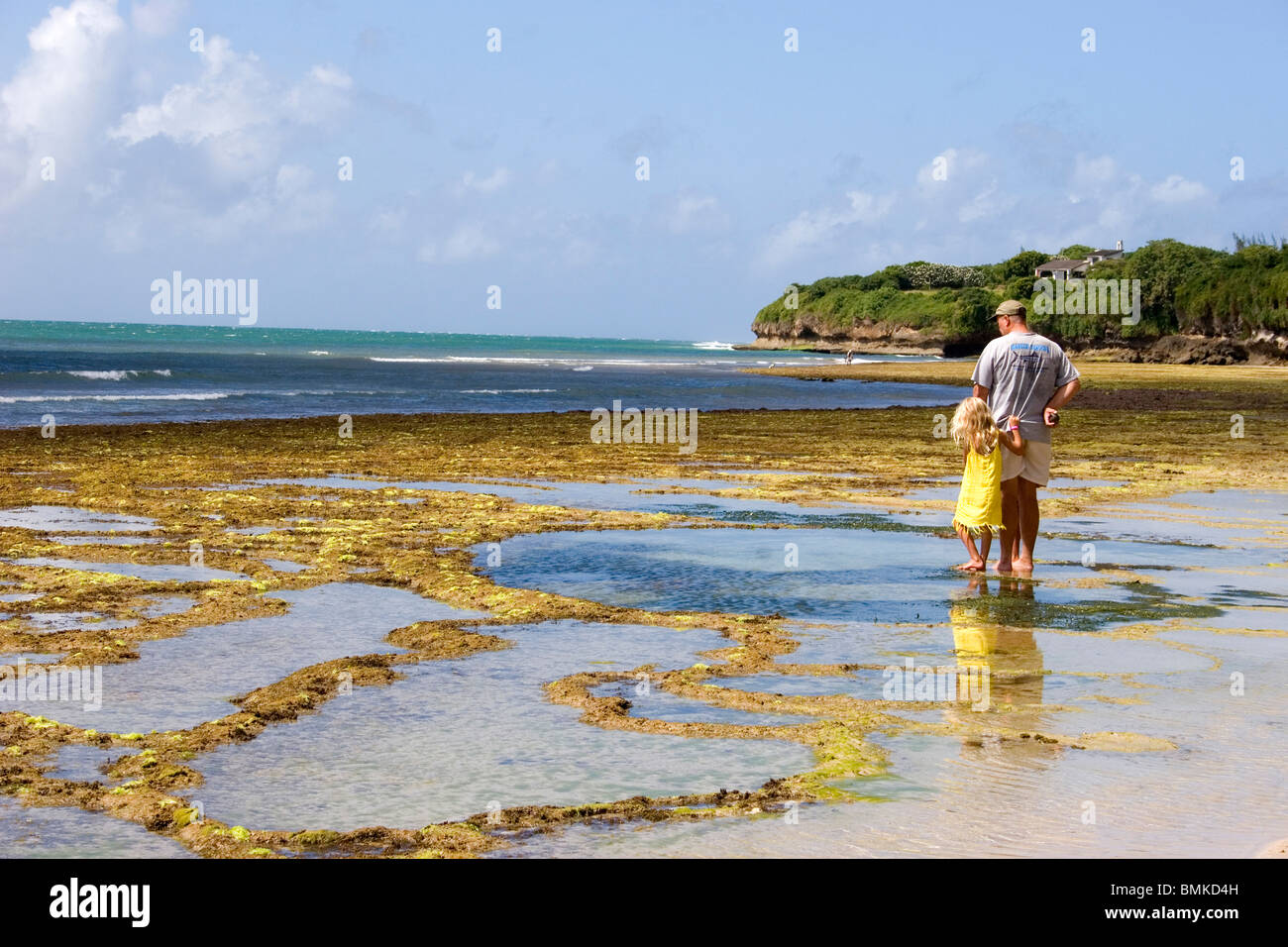 Kilifi Kenya  city pictures gallery : Africa, Kenya, Kilifi. Tidepooling In Kilifi Creek In The Indian Stock ...