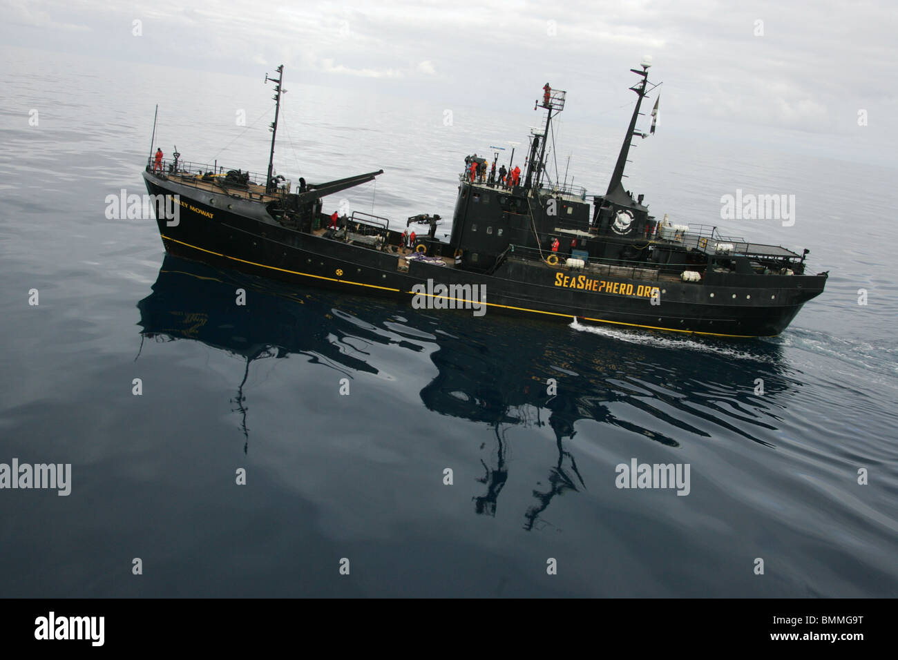 the sea shepherd conservation society The sea shepherd conservation society risk their lives to protect our ocean  friends help us help them.
