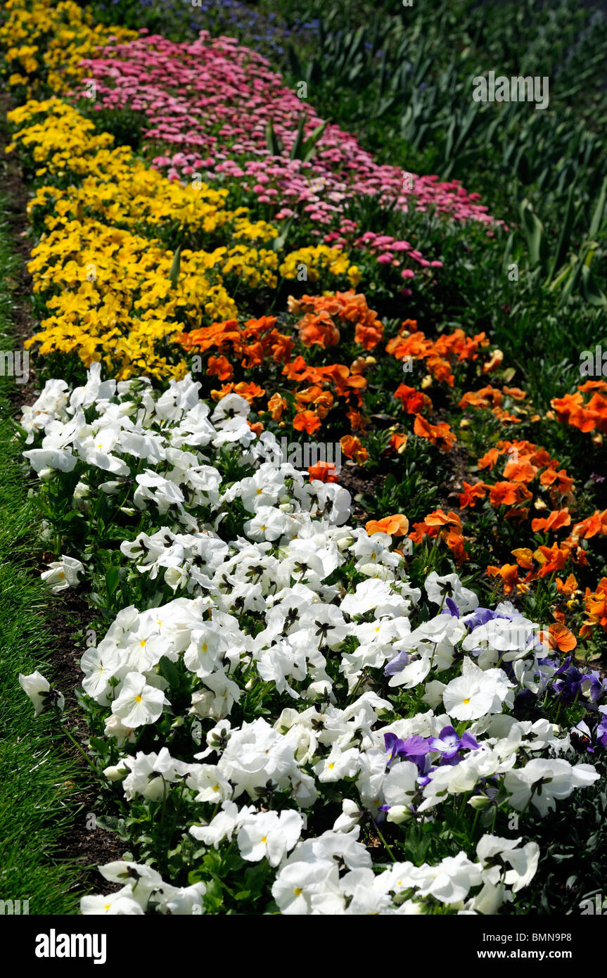 spring flower bed bedding plants annual color colour colorful white ...
