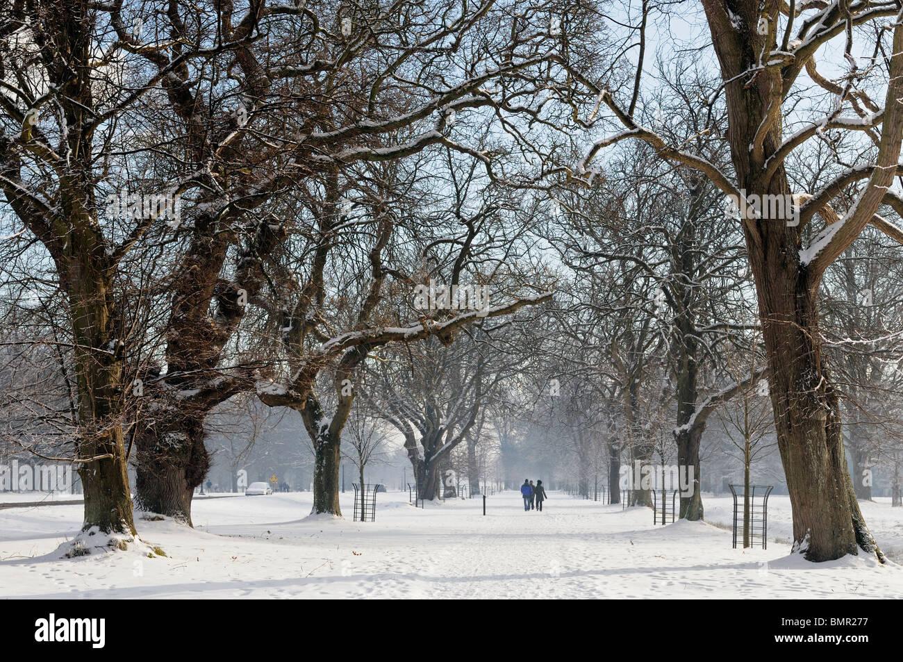 Phoenix Park Dublin Ireland Avenue path walkway trail tree snow ...