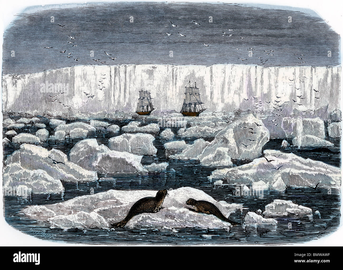 Whalers in action wood engraving published in 1855 stock illustration - Two Sailing Ships Near The Ice Shelf Of Antarctica 1800s Stock Image