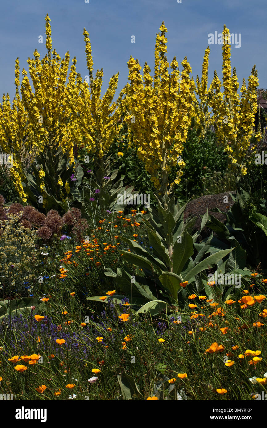 Drought Resistant Flowers And Plants In The Dry Garden At Rhs Hyde Hall