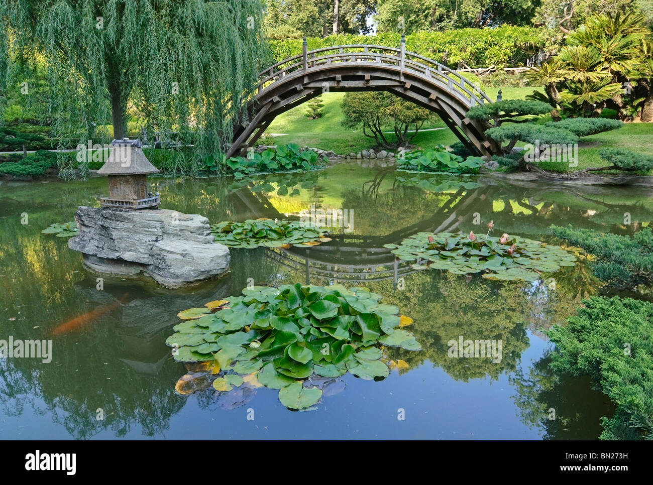 Japanese garden with moon bridge and lotus pond with koi for Fish pond bridges