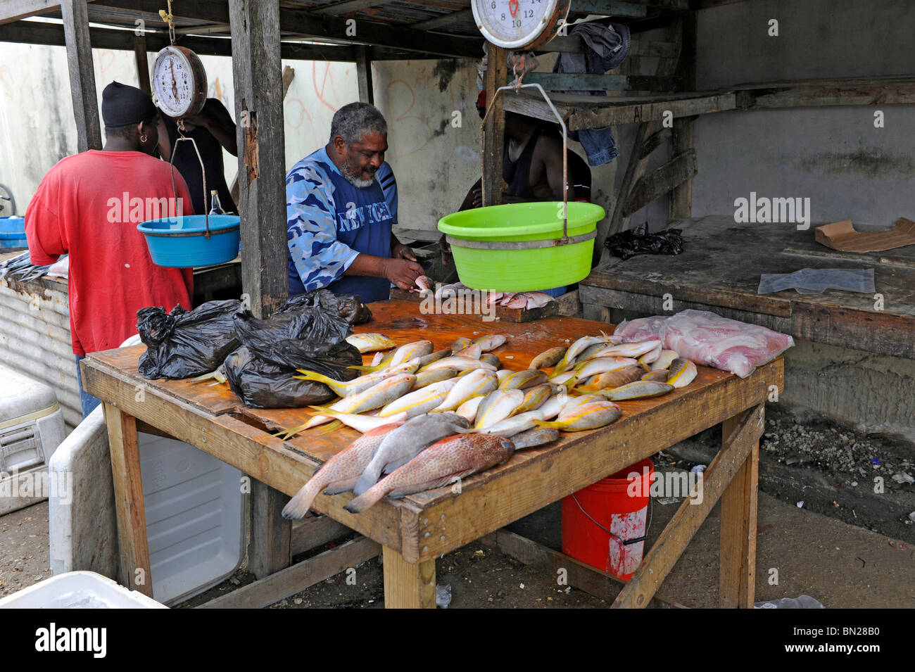 local fish market near caribbean cruise ship in belize