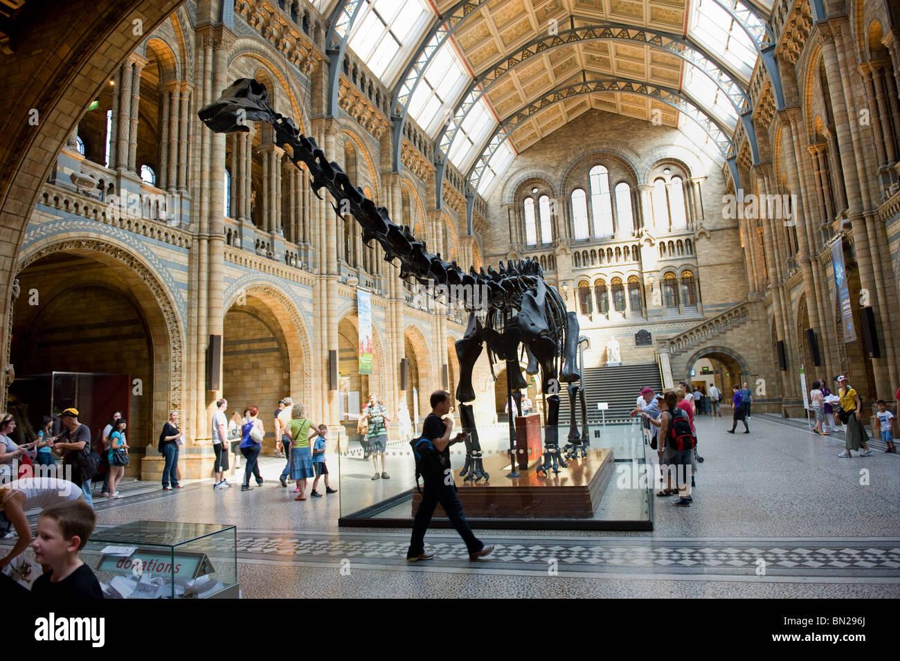 Diplodocus_skeleton_in_the_main_central_