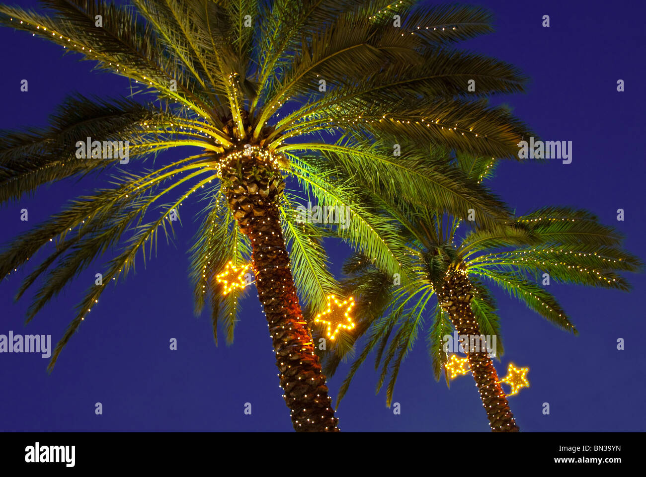 during christmas season palm trees are decorated with lights in the normandy isle neighborhood in miami - Palm Tree With Christmas Lights