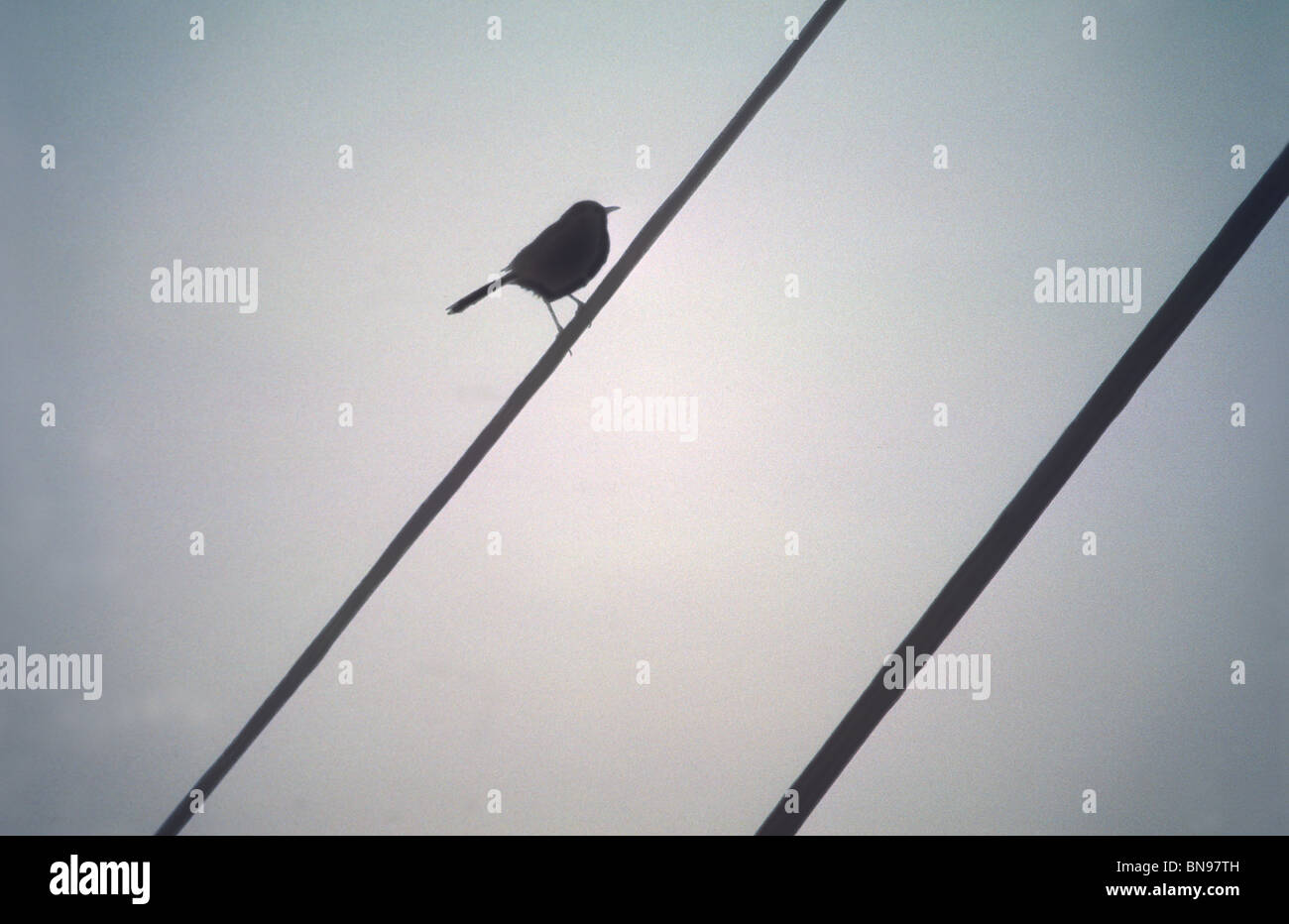 bird on a wire Stock Photo: 30321889 - Alamy