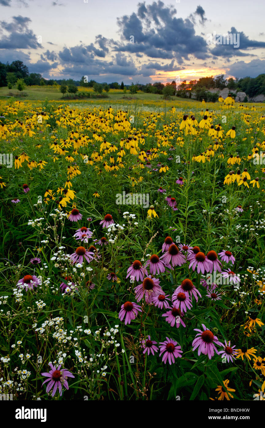 Wildflower Meadow Sunset