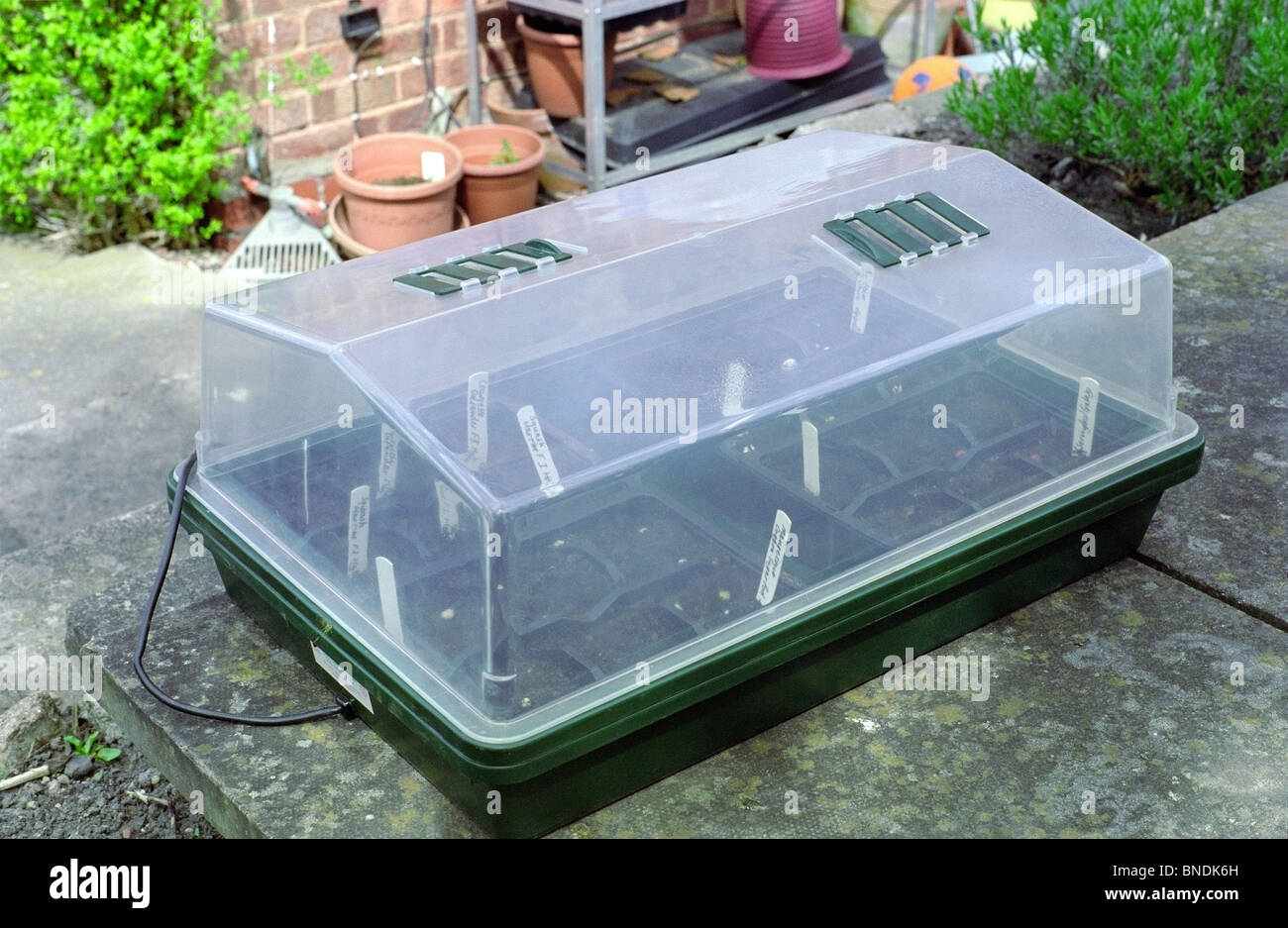 electric plant propagator with seed trays inside