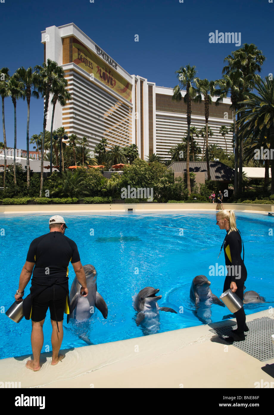Dolphin pool at the mirage an mgm resort hotel on the las vegas strip renamed
