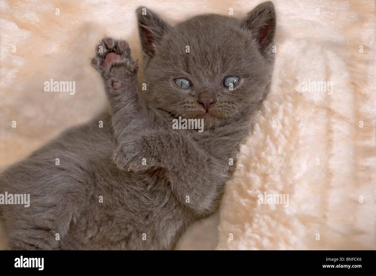 multi cat household litter