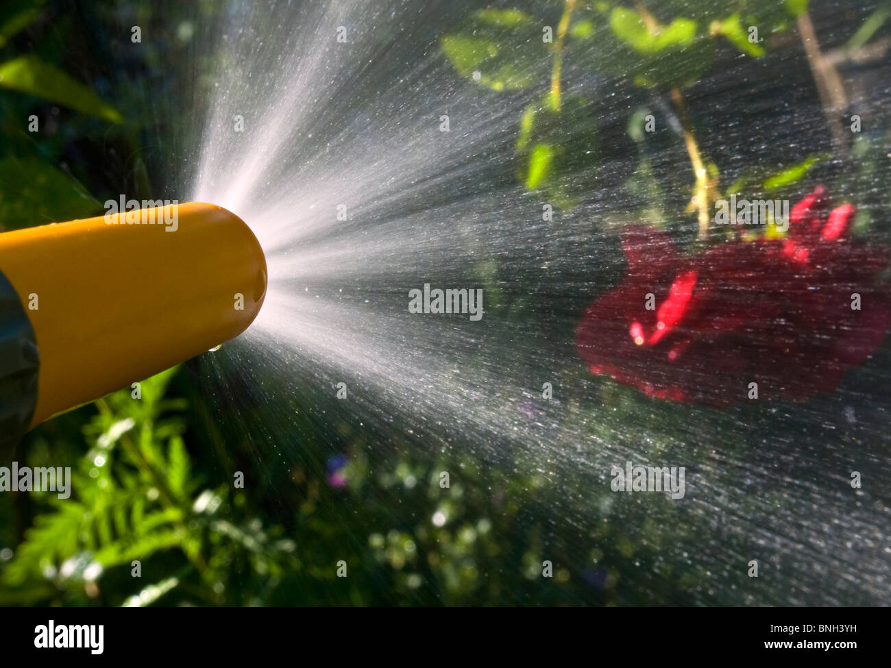 garden hose spraying water images amp pictures   becuo