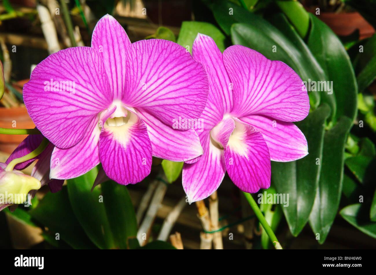 Texas, Corpus Christi. South Texas Botanical Gardens U0026 Nature Center