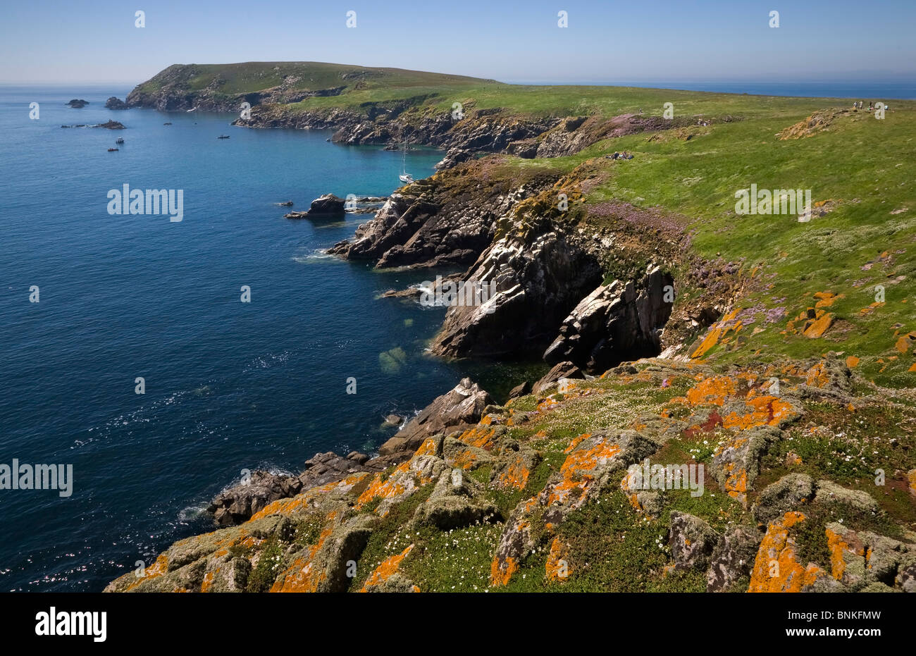 Great saltee island bird reserve the saltee islands for The wexford