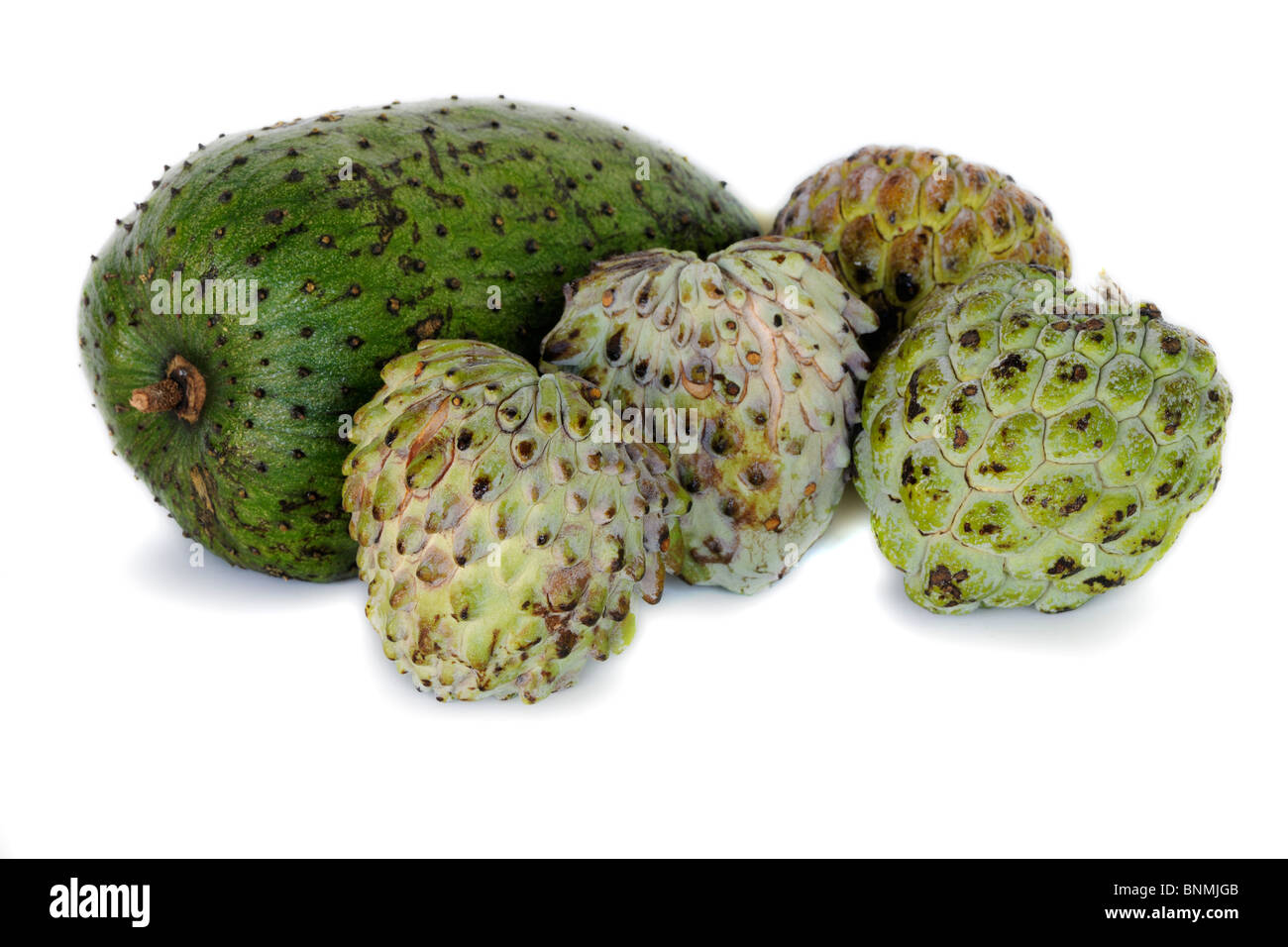 Custard Apple Coloring Pages : Guava tree coloring pages custard apple