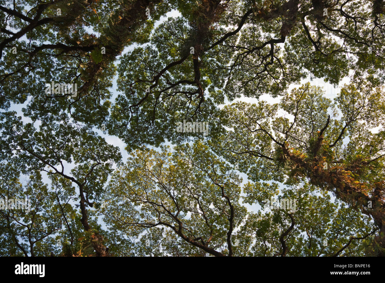 In forest tree canopies is the tendency for the crown of each tree to  shy & In forest tree canopies is the tendency for the crown of each tree ...