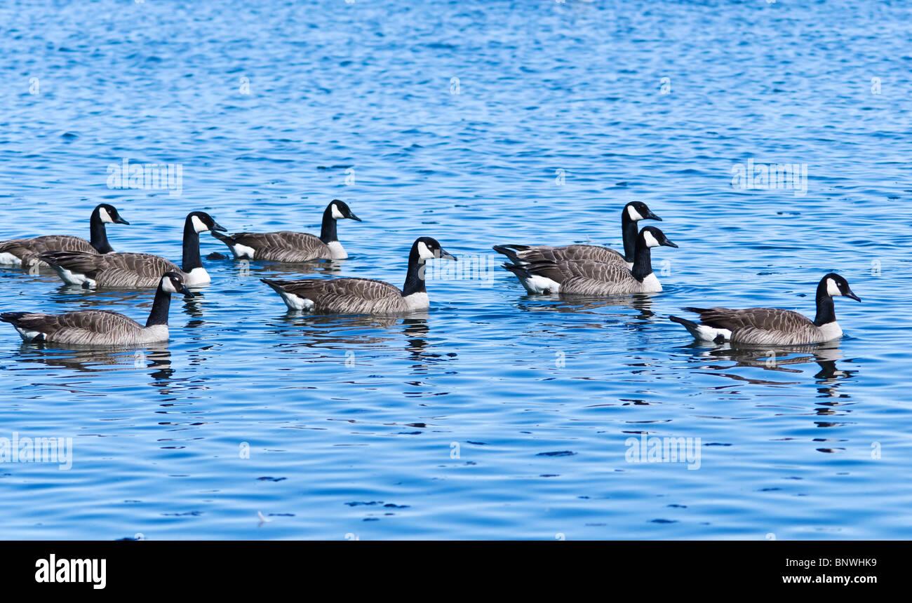 Canada Goose Coats Burlington