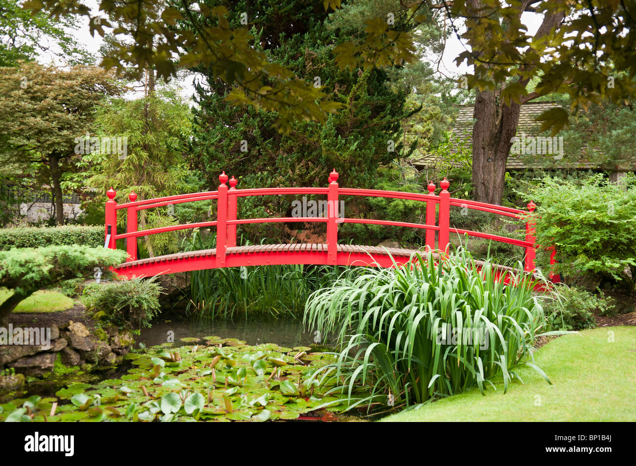 red bridge over a pond in a formal japanese garden at the