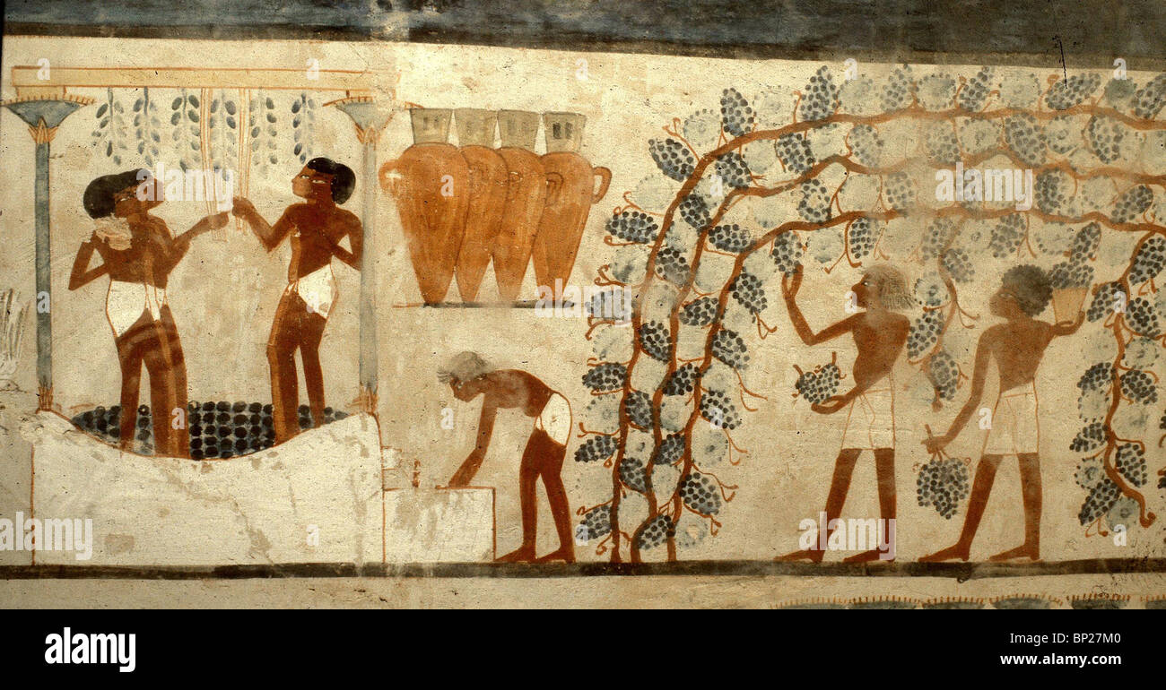WINE PRODUCTION IN ANCIENT EGYPT. FRESCO FROM THE TOMB OF NAHAT BENI AMON  DATING Part 76