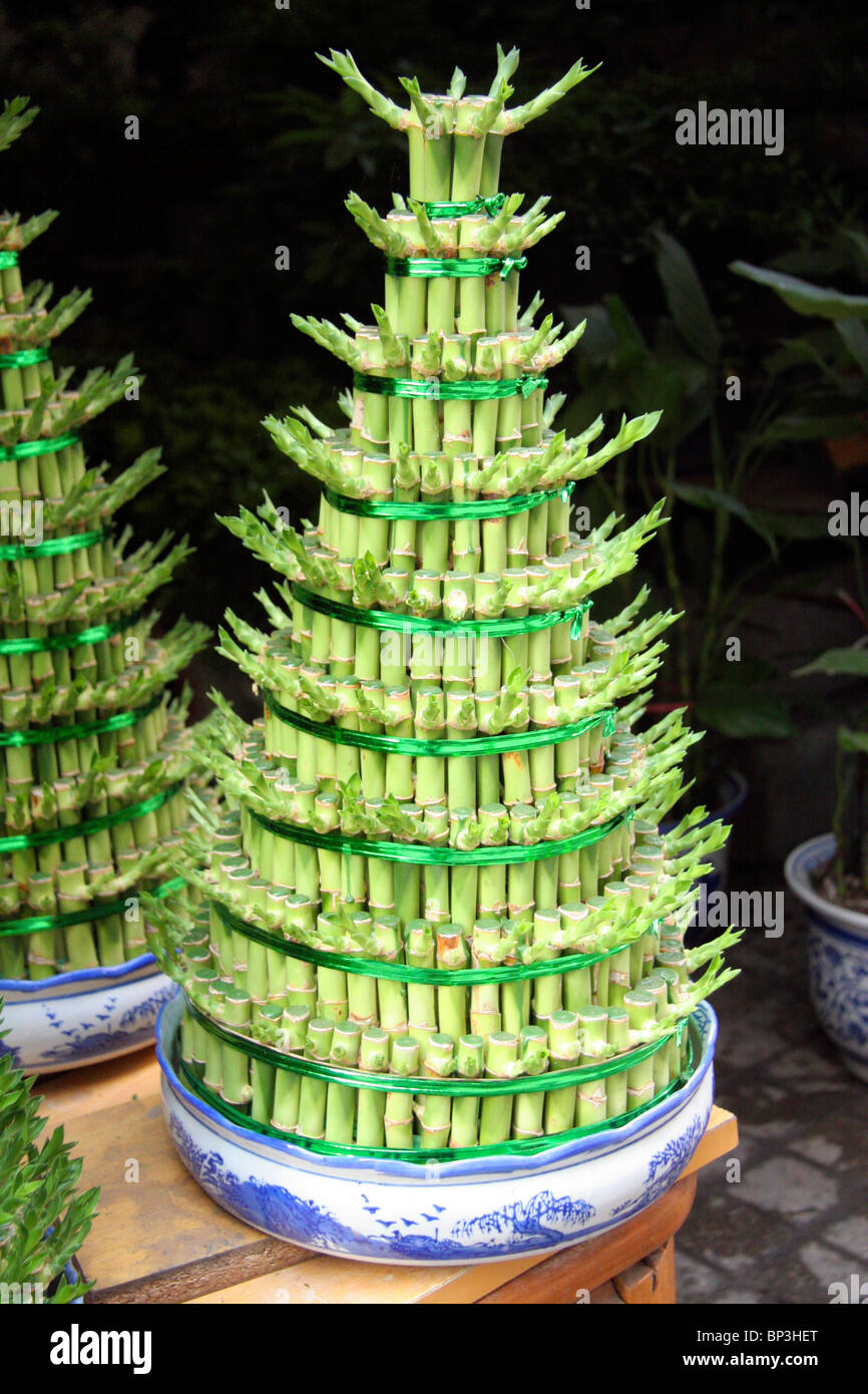 China, Chongqing. A lucky bamboo Christmas tree in a Chinese ...
