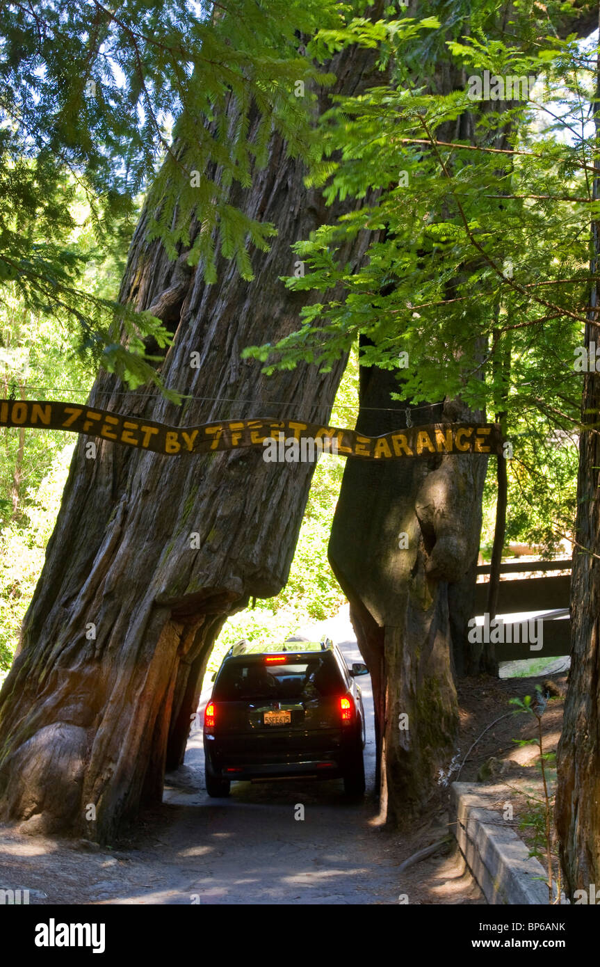Car Drives Through Tree