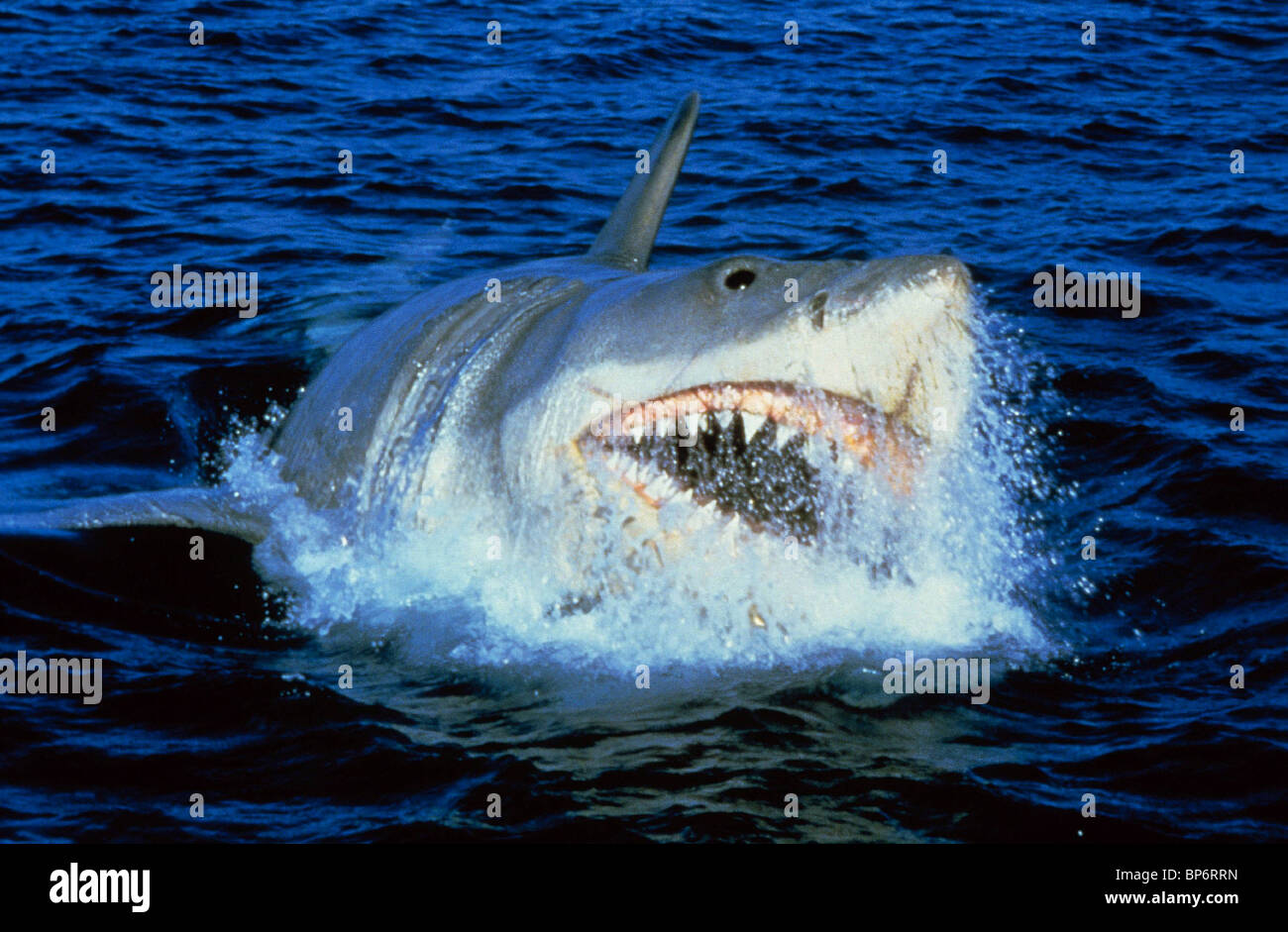 Jaws 3 Www Pixshark Com Images Galleries With A Bite