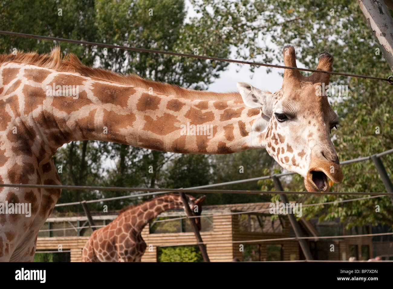 analysis of twycross zoo organisation Twycross menagerie is located in the small town of twycross in leicestershire most of the population are within an hr of twycross menagerie, approx 9 million.